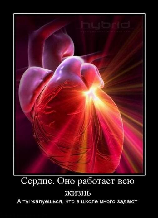 Сердце. Оно работает всю жизнь. А ты жалуешься, что в школе много задают