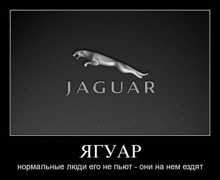 Демотиваторы: ягуар, фото жаба, деньги (13 часть)