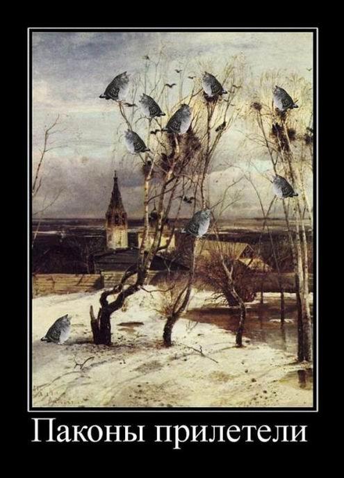 Паконы прилетели
