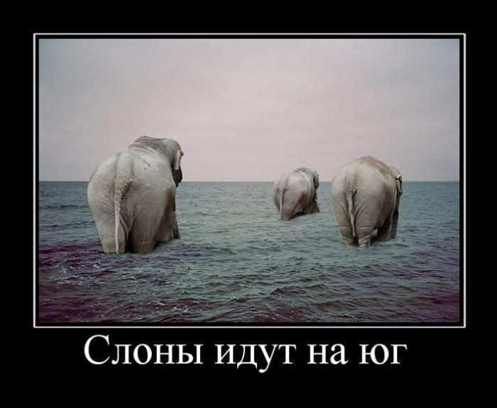 Слоны идут на юг
