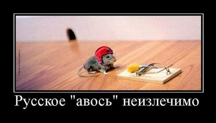 Русское «авось» неизлечимо