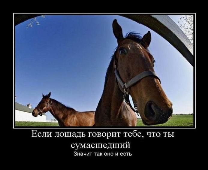 Если лошадь говорит тебе, что ты сумасшедший