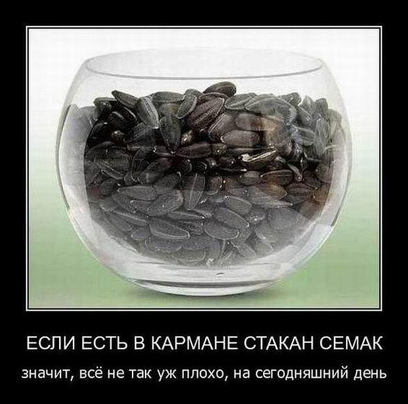 Если есть в кармане стакан семечек