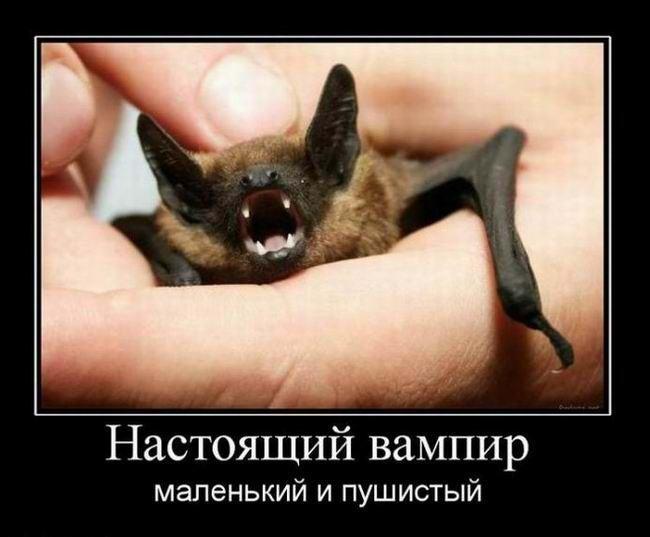 Настоящий вампир маленький и пушистый