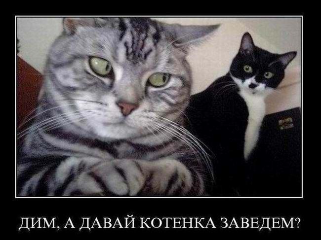 Дим, а давай котенка заведем