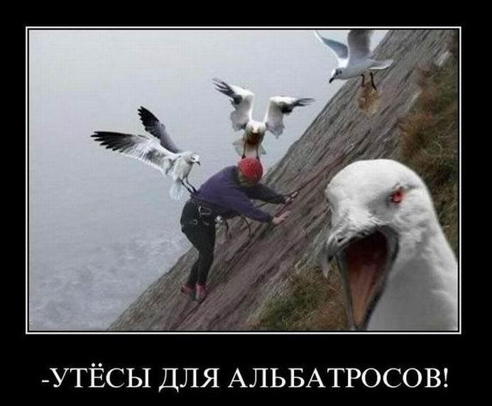 - Утёсы для альбатросов!
