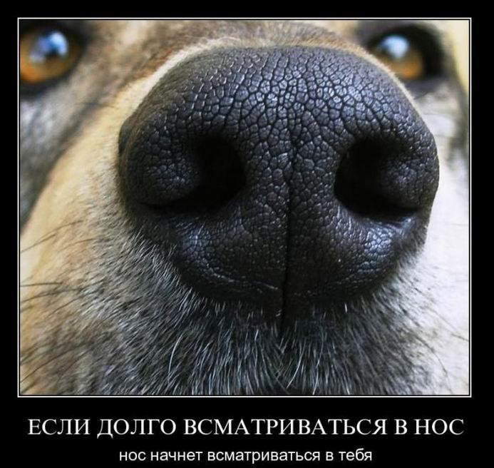 Если долго всматриваться в нос, нос начнет всматриваться в тебя