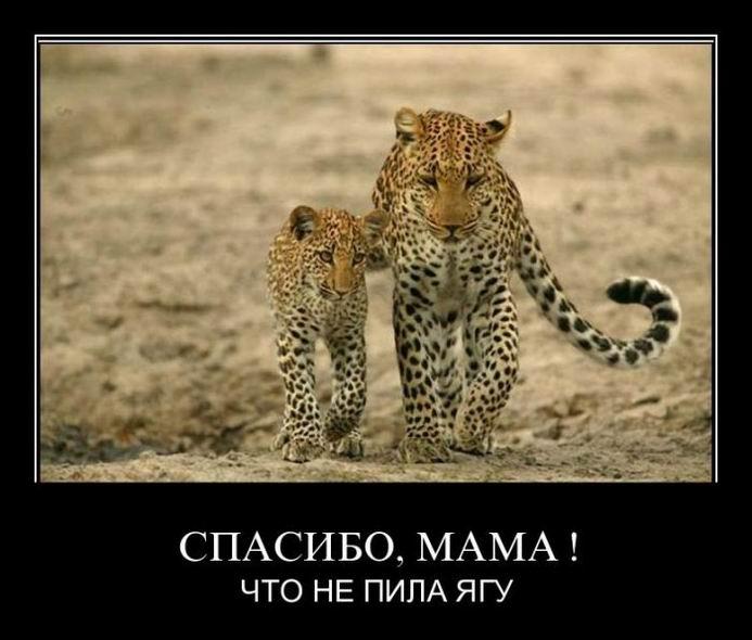 Демотиваторы про переходной возраст, meanwhile in Russia и любовный треугольник (343 часть, 50 фотографий)