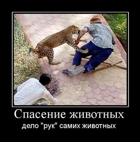 Спасение животных дело <рук> самих животных