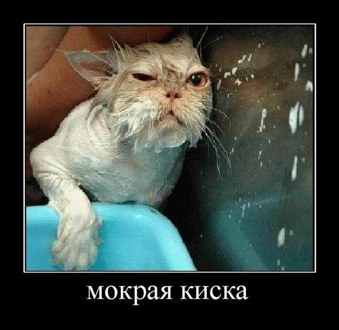 Русские лизби 18 ч мокрыми кисками 5 фотография
