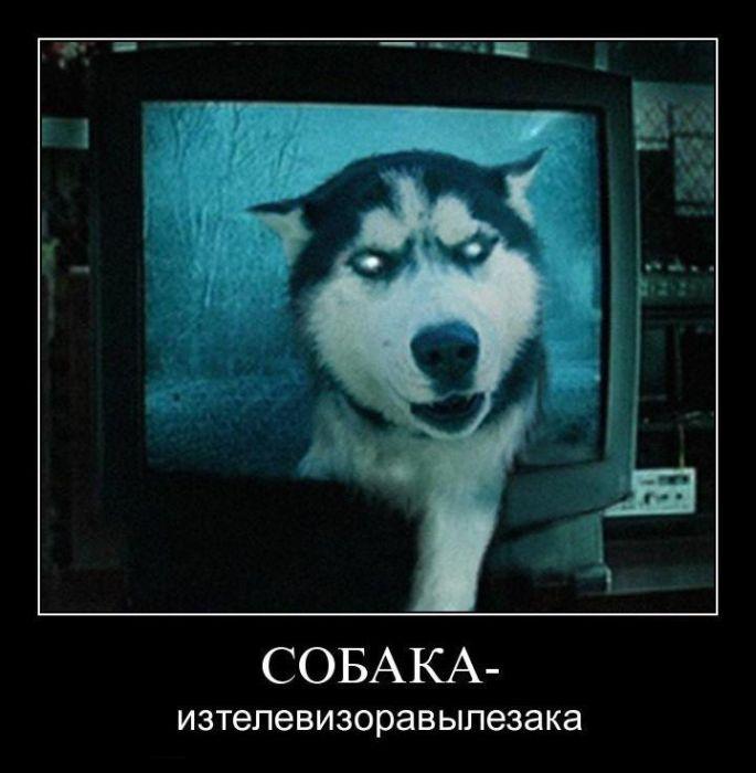 Собака-изтелевизоравылезака