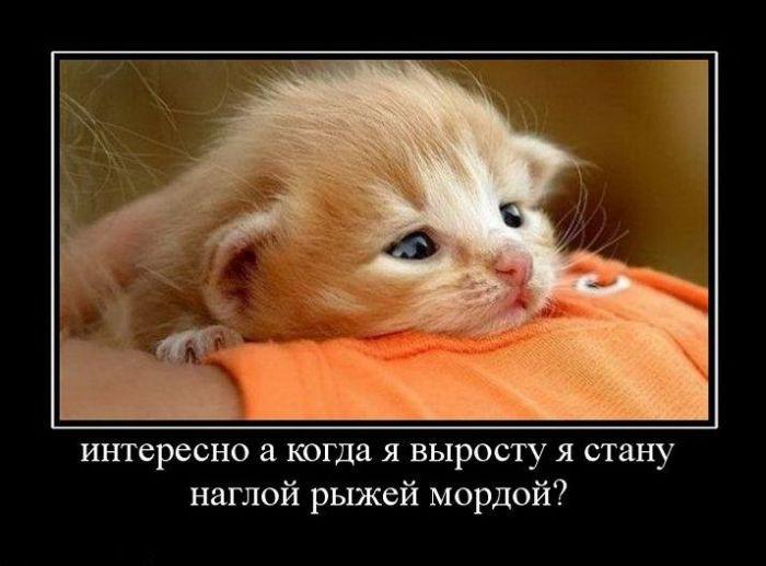 Демотиваторы про кошек, сумо и аппетит (495 часть)