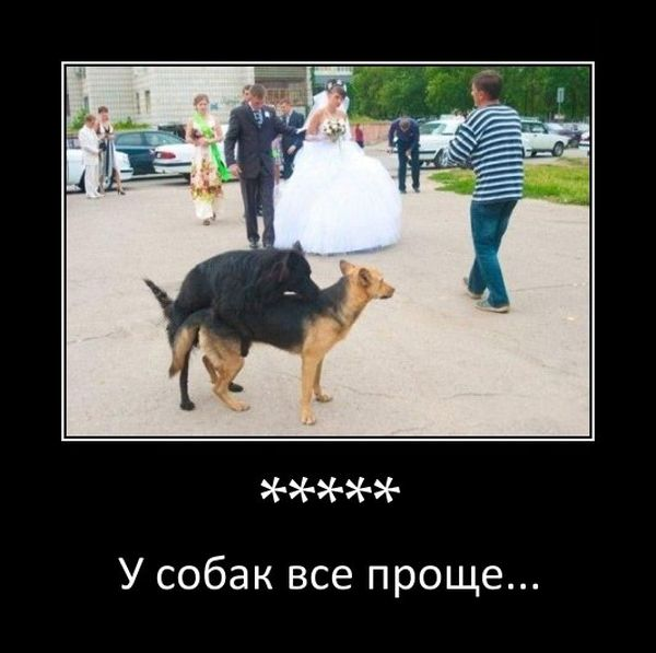 ***** У собак все проще..