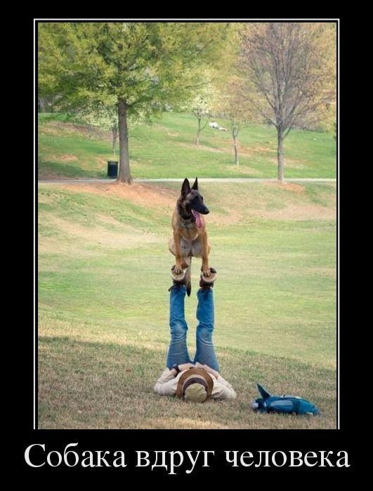 Собака вдруг человека