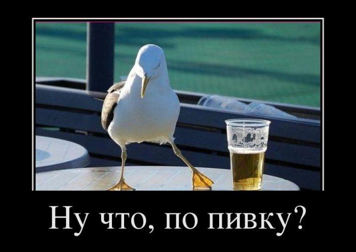 Ну что, по пивку