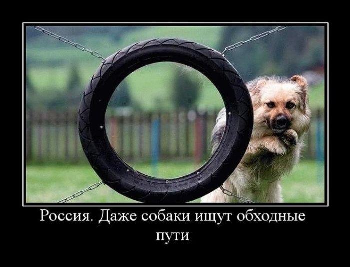 Россия. Даже собаки ищут обходные пути