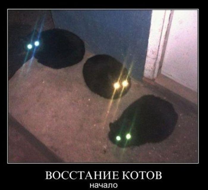 ВОсстание котов. Начало