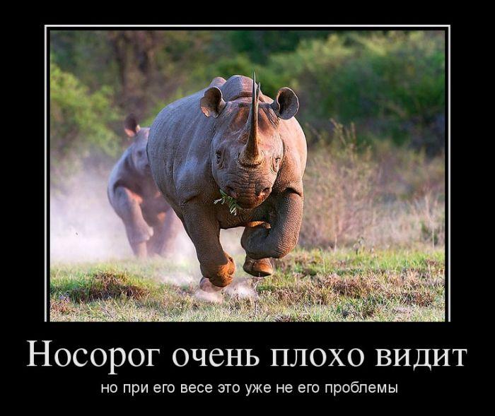 Носорог очень плохо видит, но при его весе это уже не его проблемы