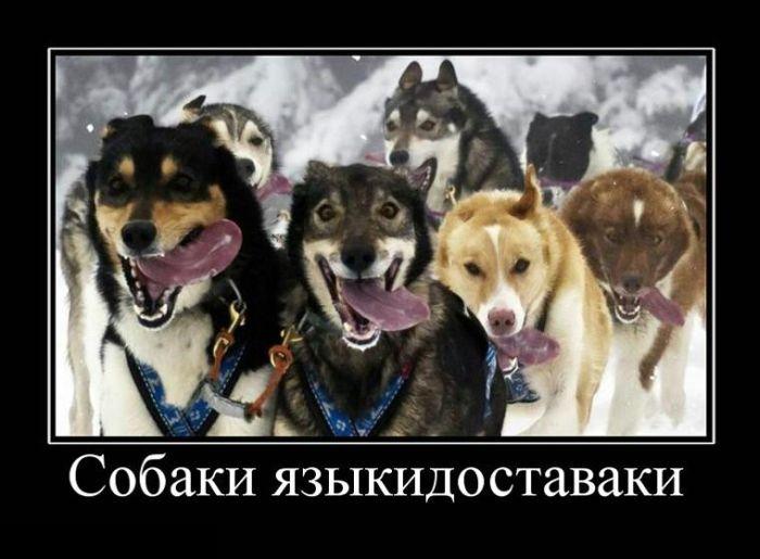 Собаки языкидоставаки
