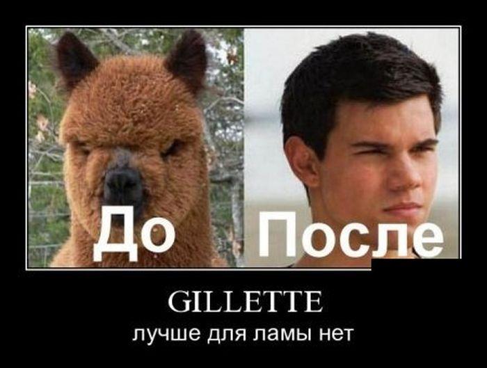 Gillette лучше для ламы нет