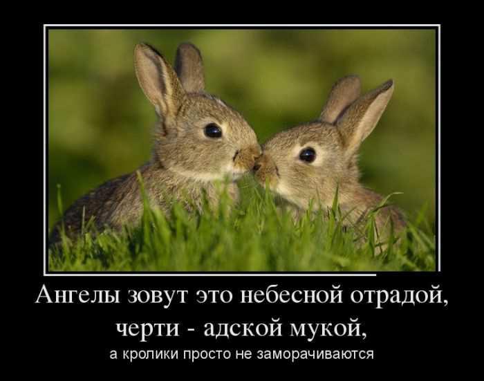 Ангелы зовут это небесной отрадой, черти - адской мукой, а кролики просто не заморачиваются