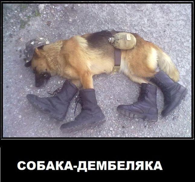 собака-дембеляка
