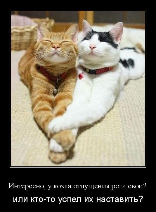 Демотиваторы про кошек, девушек и Фрейда (30 фотографий)