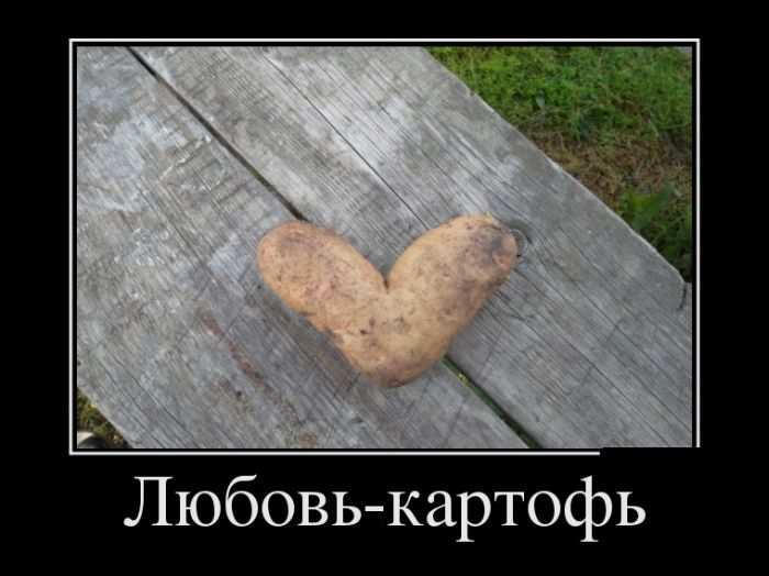 Любовь-картофь