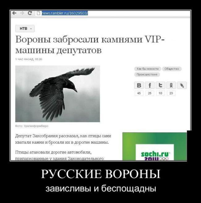 Русские вороны зависливы и беспощадны