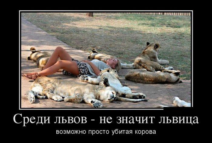 Среди львов - не значит львица, возможно просто убитая корова