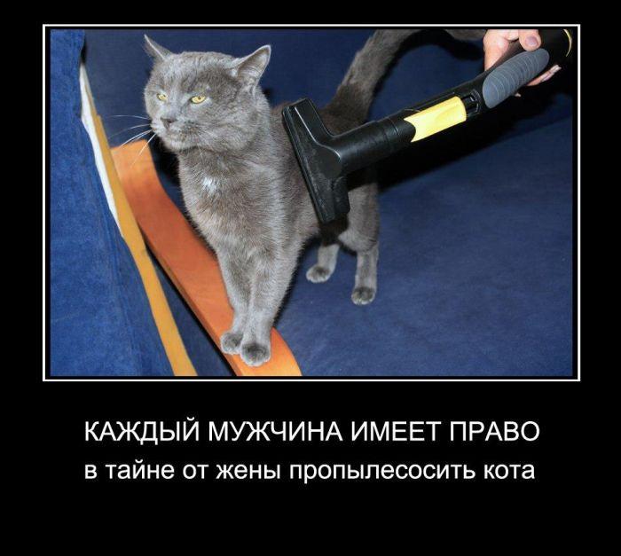 Каждый мужчина имеет право в тайне от жены пропылесосить кота