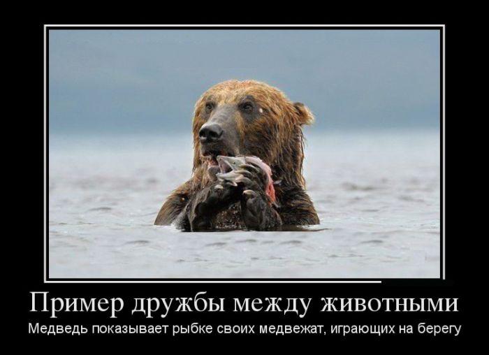 Пример дружбы между животными. Медведь показывает рыбке своих медвежат, играющих на берегу