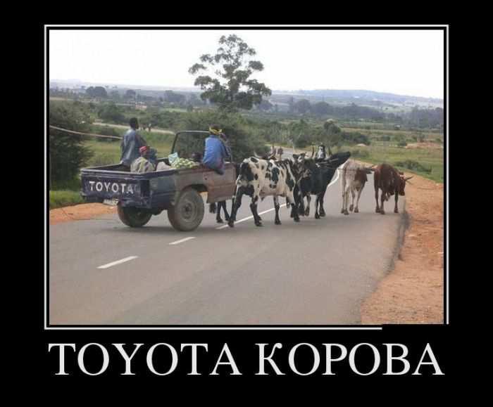 Toyota корова
