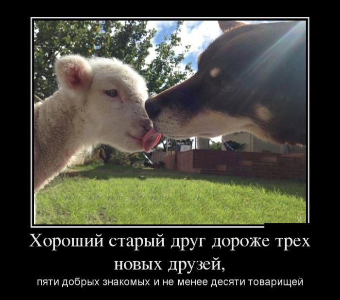 Хороший старый друг дороже трех новых друзей, пяти добрых знакомых и не менее десяти товарищей
