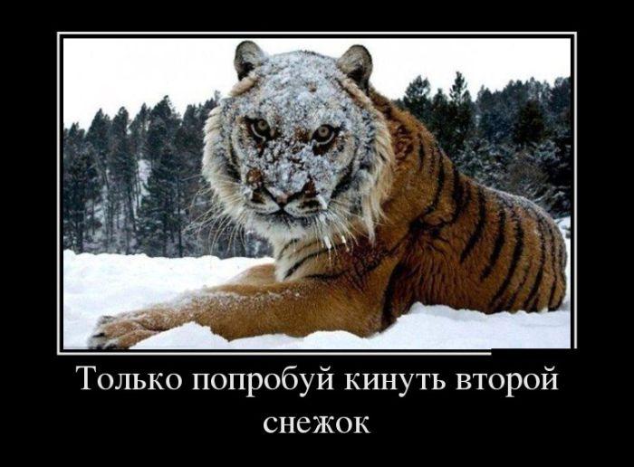 http://superdemotivator.ru/dem/demotivatory_898/6.jpg