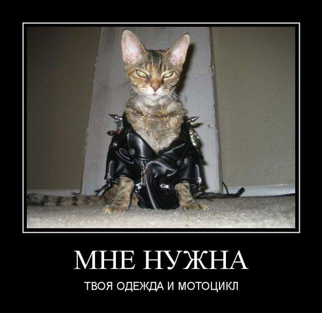 http://superdemotivator.ru/dem/demotivatory_898/9.jpg