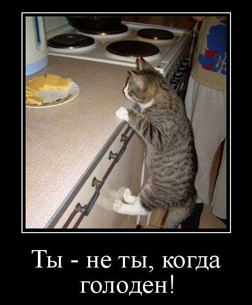 Ты - не ты, когда голоден!