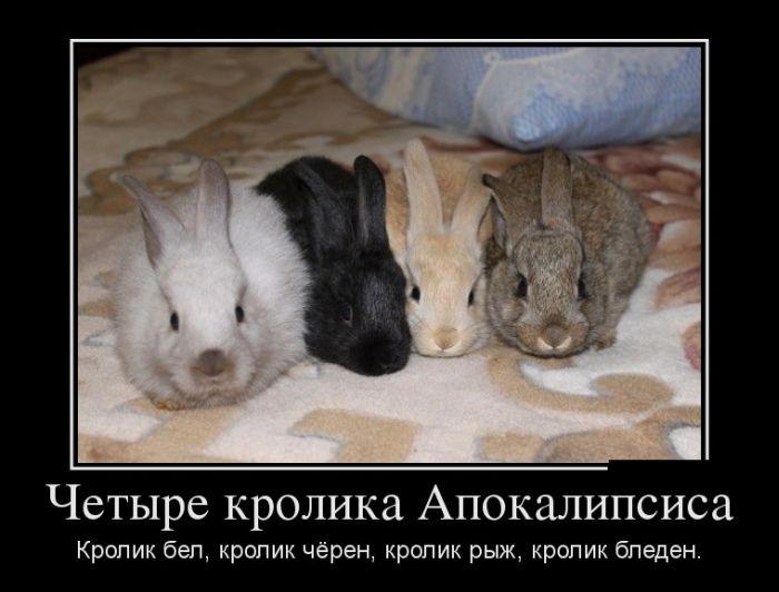 Четыре кролика Апокалипсиса. Кролик бел, кролик чёрен, кролик рыж, кролик бледен