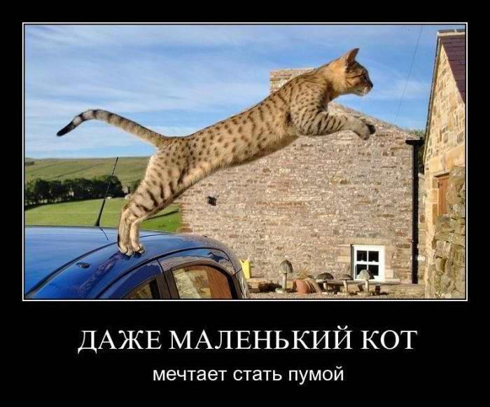 Даже маленький кот