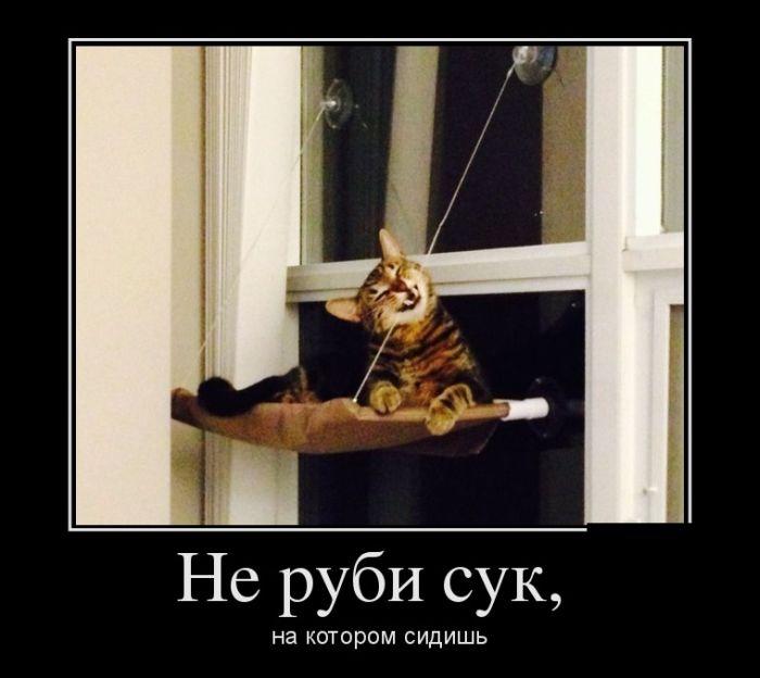 Чеченские сучки фото 11 фотография